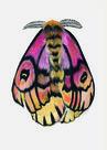 Sheep-Moth-(An-Inordinate-Fondness-#-1)-Roos-Holleman